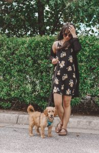 First Time Puppy Owner: Things You Need To Know