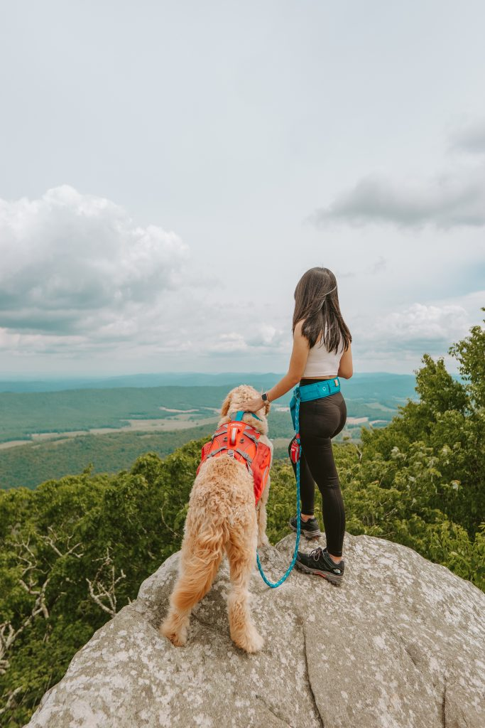 Best Day Hike Gears For Dog