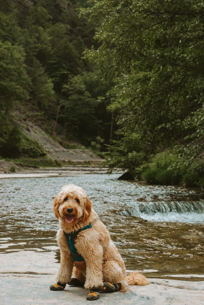 Best Day Hike Gears For Dogs